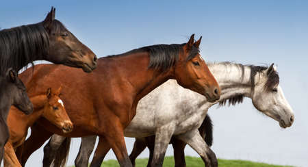 Portrait of mares and foals on studfarm pasture
