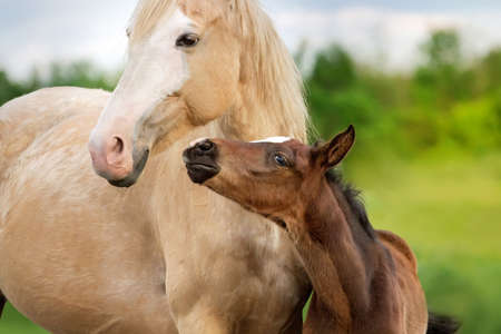 Beautiful mare with foal close up portrait