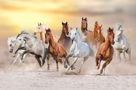 Photo pour Horses run gallop in dust against sunset sky - image libre de droit