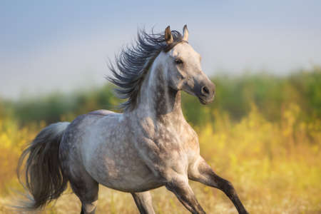 Photo for Horse run gellop  in meadow free - Royalty Free Image
