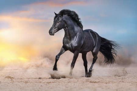 Photo pour Black stallion run on desert dust against dramatic background - image libre de droit