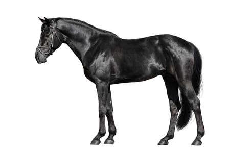 Photo pour Black horse exterior isolated on white background - image libre de droit