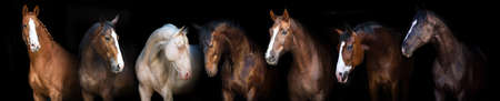 Photo for Horse group portrait at black background for banner - Royalty Free Image
