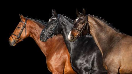 Photo pour Group of horse in bridle close up portrait on black background - image libre de droit