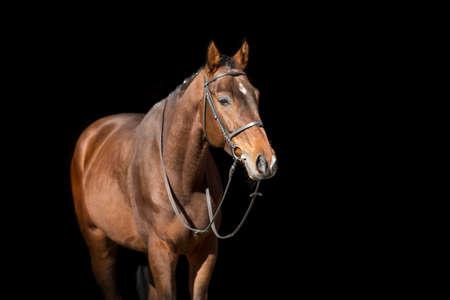 Photo pour Horse portrait in bridle isolated on black background - image libre de droit