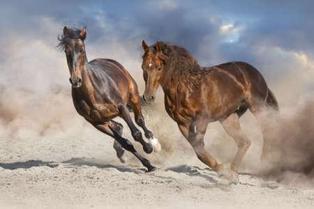 Photo pour Two horse run free in desert dust  - image libre de droit