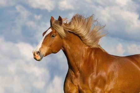Photo pour Red horse with long mane portrait against blue sky - image libre de droit