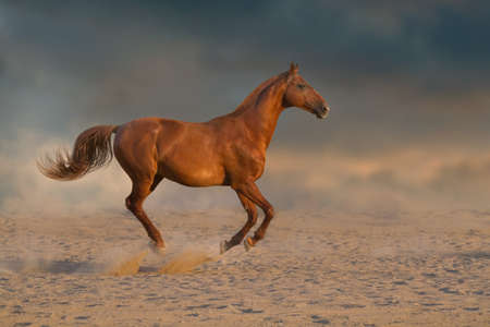 Photo pour Red stallion with long mane run fast against dramatic sky in dust - image libre de droit