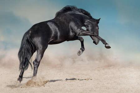 Photo pour Black stallion run on desert dust against blue background - image libre de droit