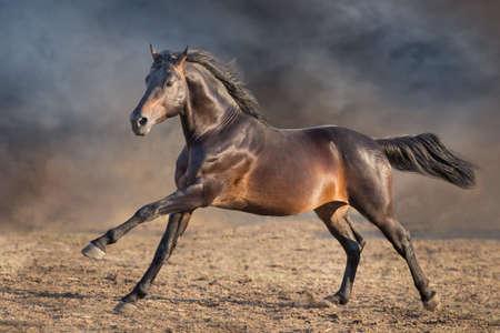 Photo pour Bay horse with lomg mane - image libre de droit