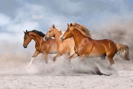 Photo pour Horse herd  galloping on sandy dust against sky - image libre de droit