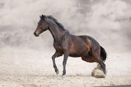 Photo pour Bay stallion with long mane run fast against dramatic sky in dust - image libre de droit