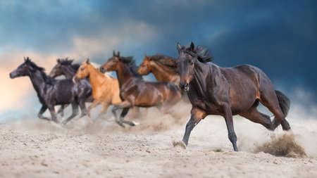 Photo pour Horses with long mane  run gallop in desert dust - image libre de droit