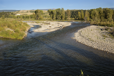 Forking channel of the Snake River, with gravel bars and willow trees, Teton National Park, Wyoming, in late summer.