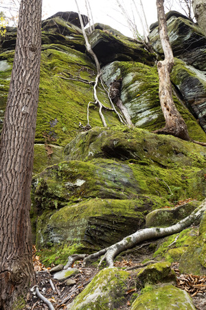 Branching roots of a small tree cascade down a green cliff face of the Ritchie Ledges in Cuyahoga Valley National Park near Cleveland, Ohio.