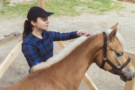 Photo for Female horse owner brushing mane of her light brown horse in the horse farm. The horse bridle is tied to the wooden fence. Flaxen horse with a blonde mane being groomed by its owner. - Royalty Free Image