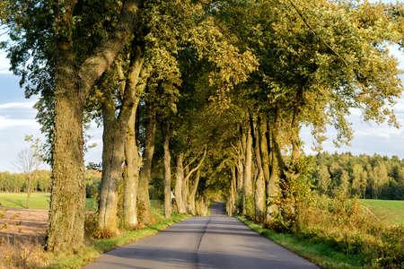 Avenue in Masuria