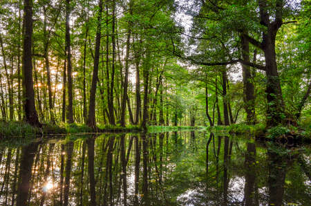 landscape with rivers and forest in the Spreewald in Brandenburg in Germany