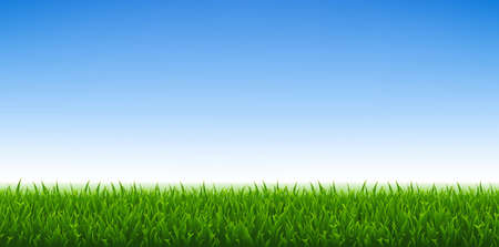 Illustration pour Green Grass And Blue Sky Background, Vector Illustration - image libre de droit