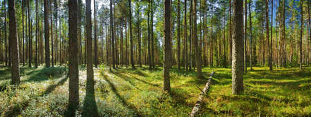 Photo pour Lahemaa national park forest - image libre de droit