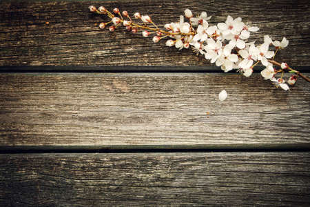 Cherry flowers on wooden background