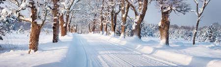 Foto de winter panorama on the road through snowy alley - Imagen libre de derechos