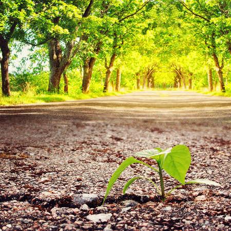 Photo pour green plant growing from crack in asphalt at summertime - image libre de droit