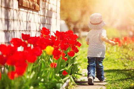 Foto de Little child walking near tulips on the flower bed in beautiful spring day - Imagen libre de derechos