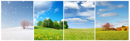Photo for Beautiful trees in four seasons landscape on the field - Royalty Free Image