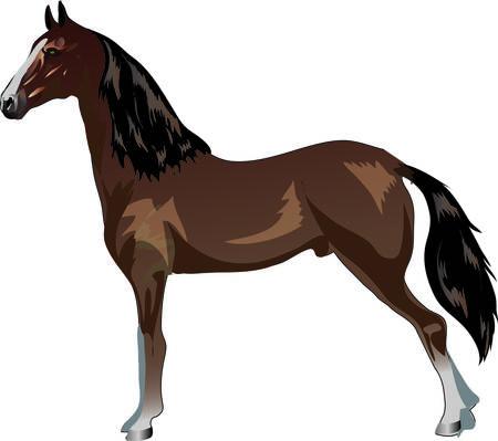 Ilustración de Saddlebred Horse,   Animal , Draught Stallion Galop - Vector Illustration - Imagen libre de derechos