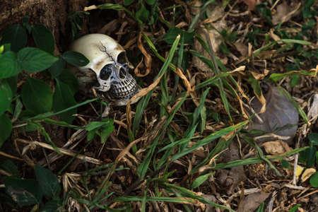 human skull in forest still life
