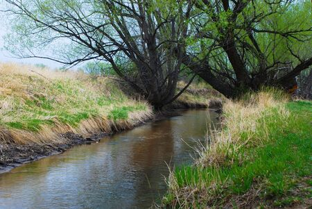 Dark water channel under tall, dark trees
