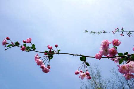 Caoyuan73150800150
