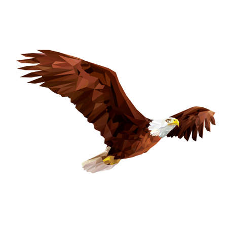 Illustration for Bald eagle - Royalty Free Image