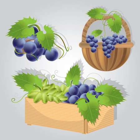 Illustration for collection of grapes in basket - Royalty Free Image