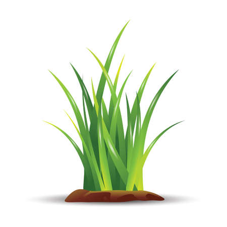 Illustration for grass - Royalty Free Image