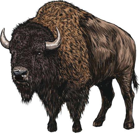 Illustration pour bison - image libre de droit