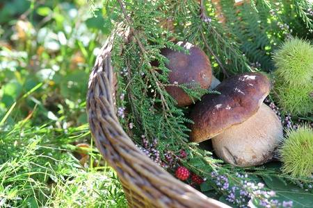 Big beautiful mushroom in wicker basket . Autumn berry and flower compositionの写真素材
