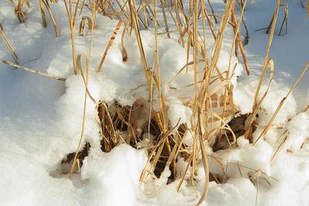 snow on tall prairie grass; Homestead National Monument of America, Beatrice, Nebraska