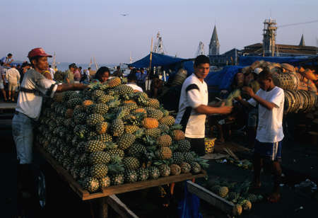 Ver o Peso Market (1668)   Placing pineapple  in place at dawn.  BELEM (Amazonas).BRAZIL