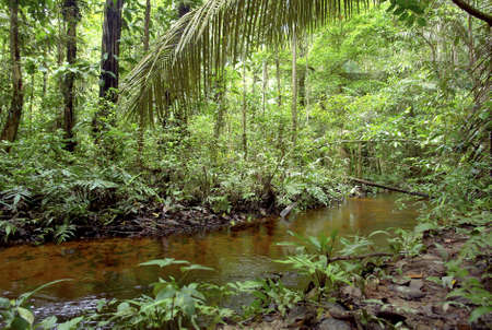 Amazon vegetation and small water stream