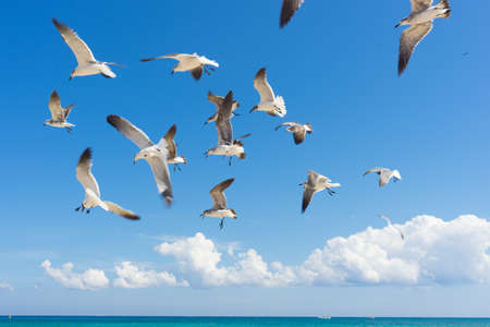 Photo for Seagulls flying over the sea - Royalty Free Image