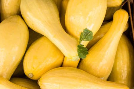 Photo pour Yellow squash for sale at farmers market in Asheville North Carolina - image libre de droit