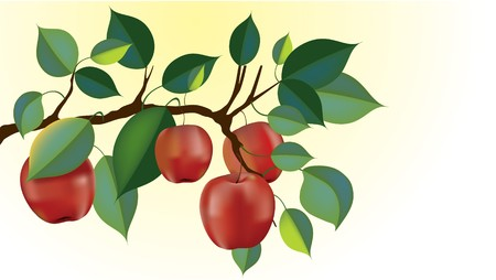 red delicious apple branch ready for harvest. gradient mesh used throughout