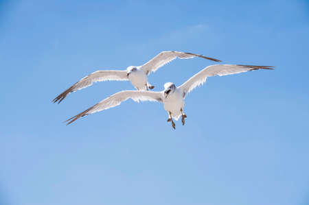 Photo for Flying seagulls against the blue sky background - Royalty Free Image