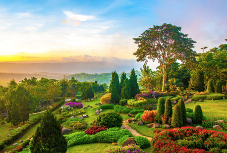 Beautiful garden of colorful flowers on hill in the morning