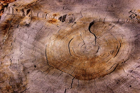 Tree rings on stump after a forest fire on the  Kaibab Plateau, Arizona