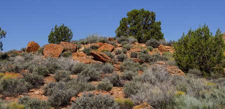Desert Landscape with Sage Brush