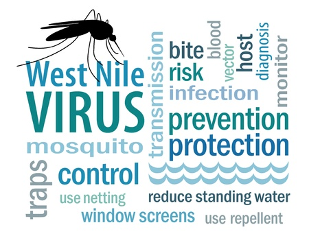 West Nile Virus word cloud, mosquito, standing water, graphic illustration, isolated on white background