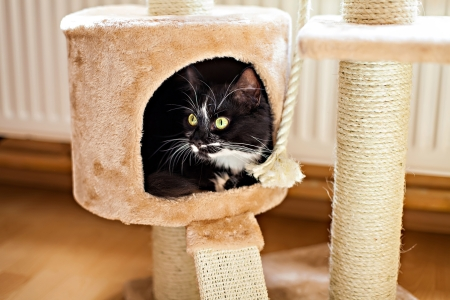 Photo pour Beautiful cat laying in box on the scratching post - image libre de droit